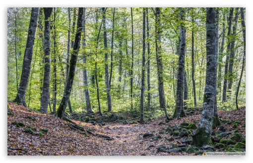 Strolling Around La Fageda den Jord Catalonia ❤ 4K UHD Wallpaper for Wide 16:10 5:3 Widescreen WHXGA WQXGA WUXGA WXGA WGA ; UltraWide 21:9 24:10 ; 4K UHD 16:9 Ultra High Definition 2160p 1440p 1080p 900p 720p ; UHD 16:9 2160p 1440p 1080p 900p 720p ; Standard 4:3 5:4 Fullscreen UXGA XGA SVGA QSXGA SXGA ; Smartphone 16:9 2160p 1440p 1080p 900p 720p ; Tablet 1:1 ; iPad 1/2/Mini ; Mobile 4:3 5:3 16:9 5:4 - UXGA XGA SVGA WGA 2160p 1440p 1080p 900p 720p QSXGA SXGA ;