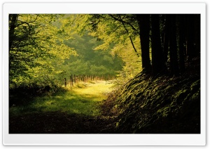 Summer Day In The Forest HD Wide Wallpaper for Widescreen