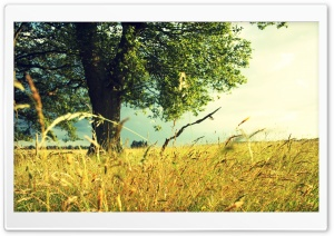 Summer Field HD Wide Wallpaper for Widescreen