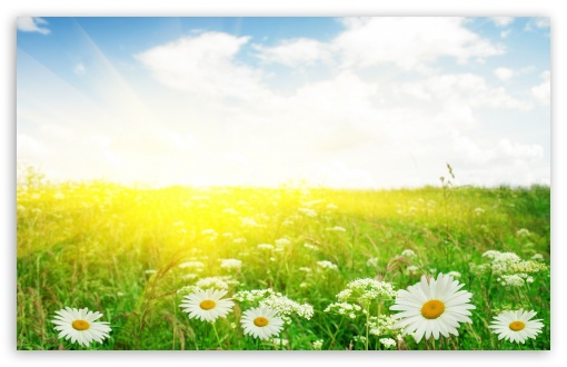 Summer Field HD wallpaper for Standard 4:3 5:4 Fullscreen UXGA XGA SVGA QSXGA SXGA ; Wide 16:10 5:3 Widescreen WHXGA WQXGA WUXGA WXGA WGA ; HD 16:9 High Definition WQHD QWXGA 1080p 900p 720p QHD nHD ; Other 3:2 DVGA HVGA HQVGA devices ( Apple PowerBook G4 iPhone 4 3G 3GS iPod Touch ) ; Mobile VGA WVGA iPhone iPad PSP Phone - VGA QVGA Smartphone ( PocketPC GPS iPod Zune BlackBerry HTC Samsung LG Nokia Eten Asus ) WVGA WQVGA Smartphone ( HTC Samsung Sony Ericsson LG Vertu MIO ) HVGA Smartphone ( Apple iPhone iPod BlackBerry HTC Samsung Nokia ) Sony PSP Zune HD Zen ; Tablet 2 Android ; Dual 4:3 5:4 5:3 16:9 UXGA XGA SVGA QSXGA SXGA WGA WQHD QWXGA 1080p 900p 720p QHD nHD ;