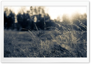 Summer Field, Black And White HD Wide Wallpaper for Widescreen