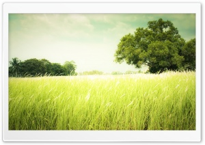 Summer Field Grass HD Wide Wallpaper for Widescreen