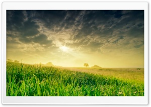 Summer Field In The Morning HD Wide Wallpaper for Widescreen