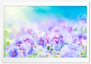 Summer Flowers HD Wide Wallpaper for Widescreen