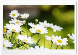 Summer Flowers HD Wide Wallpaper for Widescreen