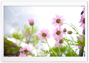 Summer Flowers bloomin' HD Wide Wallpaper for Widescreen