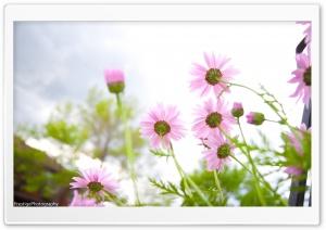 Summer Flowers bloomin' HD Wide Wallpaper for 4K UHD Widescreen desktop & smartphone