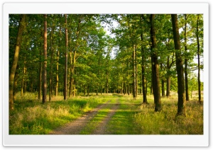 Summer Forest HD Wide Wallpaper for Widescreen