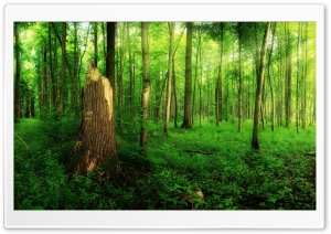 Summer Forest Broken Tree HD Wide Wallpaper for Widescreen