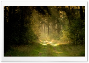 Summer Forest Road HD Wide Wallpaper for Widescreen
