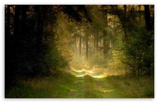 Summer Forest Road HD wallpaper for Wide 16:10 5:3 Widescreen WHXGA WQXGA WUXGA WXGA WGA ; HD 16:9 High Definition WQHD QWXGA 1080p 900p 720p QHD nHD ; Standard 4:3 5:4 3:2 Fullscreen UXGA XGA SVGA QSXGA SXGA DVGA HVGA HQVGA devices ( Apple PowerBook G4 iPhone 4 3G 3GS iPod Touch ) ; Tablet 1:1 ; iPad 1/2/Mini ; Mobile 4:3 5:3 3:2 16:9 5:4 - UXGA XGA SVGA WGA DVGA HVGA HQVGA devices ( Apple PowerBook G4 iPhone 4 3G 3GS iPod Touch ) WQHD QWXGA 1080p 900p 720p QHD nHD QSXGA SXGA ; Dual 16:10 5:3 16:9 4:3 5:4 WHXGA WQXGA WUXGA WXGA WGA WQHD QWXGA 1080p 900p 720p QHD nHD UXGA XGA SVGA QSXGA SXGA ;