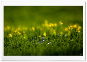 Summer Grass HD Wide Wallpaper for 4K UHD Widescreen desktop & smartphone
