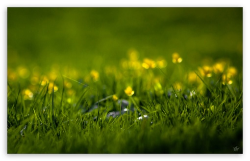 Summer Grass HD wallpaper for Standard 4:3 5:4 Fullscreen UXGA XGA SVGA QSXGA SXGA ; Wide 16:10 5:3 Widescreen WHXGA WQXGA WUXGA WXGA WGA ; HD 16:9 High Definition WQHD QWXGA 1080p 900p 720p QHD nHD ; Other 3:2 DVGA HVGA HQVGA devices ( Apple PowerBook G4 iPhone 4 3G 3GS iPod Touch ) ; Mobile VGA WVGA iPhone iPad PSP Phone - VGA QVGA Smartphone ( PocketPC GPS iPod Zune BlackBerry HTC Samsung LG Nokia Eten Asus ) WVGA WQVGA Smartphone ( HTC Samsung Sony Ericsson LG Vertu MIO ) HVGA Smartphone ( Apple iPhone iPod BlackBerry HTC Samsung Nokia ) Sony PSP Zune HD Zen ; Tablet 2 Android ; Dual 4:3 5:4 16:10 5:3 16:9 UXGA XGA SVGA QSXGA SXGA WHXGA WQXGA WUXGA WXGA WGA WQHD QWXGA 1080p 900p 720p QHD nHD ;