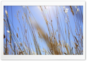 Summer Grass HD Wide Wallpaper for Widescreen