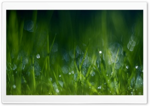 Summer Grass, Bokeh HD Wide Wallpaper for Widescreen