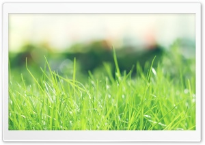 Summer Grass, Close Up HD Wide Wallpaper for Widescreen