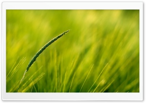 Summer Green Grass HD Wide Wallpaper for Widescreen