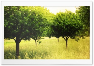 Summer Green Trees HD Wide Wallpaper for Widescreen