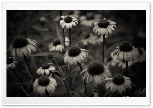 Summer in Black and White HD Wide Wallpaper for Widescreen