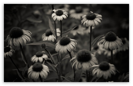 Summer in Black and White HD wallpaper for Wide 16:10 5:3 Widescreen WHXGA WQXGA WUXGA WXGA WGA ; HD 16:9 High Definition WQHD QWXGA 1080p 900p 720p QHD nHD ; UHD 16:9 WQHD QWXGA 1080p 900p 720p QHD nHD ; Standard 4:3 5:4 3:2 Fullscreen UXGA XGA SVGA QSXGA SXGA DVGA HVGA HQVGA devices ( Apple PowerBook G4 iPhone 4 3G 3GS iPod Touch ) ; Tablet 1:1 ; iPad 1/2/Mini ; Mobile 4:3 5:3 3:2 16:9 5:4 - UXGA XGA SVGA WGA DVGA HVGA HQVGA devices ( Apple PowerBook G4 iPhone 4 3G 3GS iPod Touch ) WQHD QWXGA 1080p 900p 720p QHD nHD QSXGA SXGA ; Dual 16:10 5:3 16:9 4:3 5:4 WHXGA WQXGA WUXGA WXGA WGA WQHD QWXGA 1080p 900p 720p QHD nHD UXGA XGA SVGA QSXGA SXGA ;