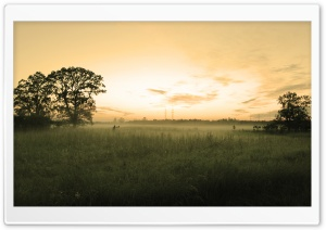 Summer Morning Mist HD Wide Wallpaper for Widescreen