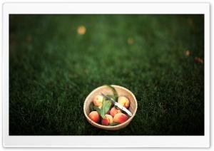 Summer Peaches Ultra HD Wallpaper for 4K UHD Widescreen desktop, tablet & smartphone