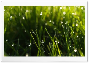 Summer Rain HD Wide Wallpaper for Widescreen
