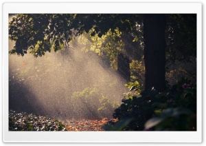 Summer Rain, Forest HD Wide Wallpaper for Widescreen