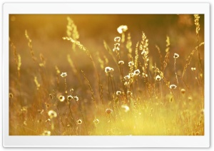 Summer Sunlight Over Field HD Wide Wallpaper for 4K UHD Widescreen desktop & smartphone