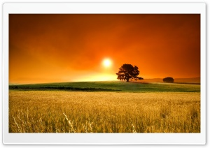 Summer Sunset HD Wide Wallpaper for Widescreen