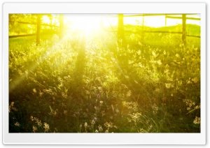Summer Sunshine HD Wide Wallpaper for Widescreen