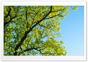 Summer Tree HD Wide Wallpaper for Widescreen