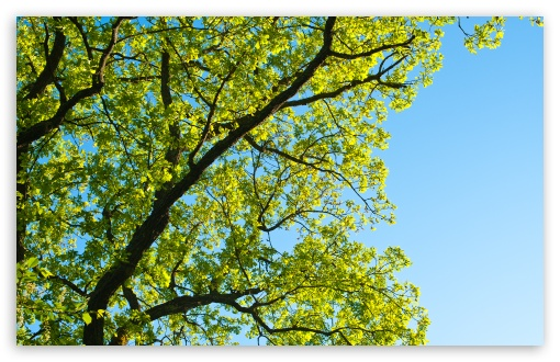 Summer Tree HD wallpaper for Wide 16:10 5:3 Widescreen WHXGA WQXGA WUXGA WXGA WGA ; HD 16:9 High Definition WQHD QWXGA 1080p 900p 720p QHD nHD ; Standard 4:3 5:4 3:2 Fullscreen UXGA XGA SVGA QSXGA SXGA DVGA HVGA HQVGA devices ( Apple PowerBook G4 iPhone 4 3G 3GS iPod Touch ) ; Tablet 1:1 ; iPad 1/2/Mini ; Mobile 4:3 5:3 3:2 16:9 5:4 - UXGA XGA SVGA WGA DVGA HVGA HQVGA devices ( Apple PowerBook G4 iPhone 4 3G 3GS iPod Touch ) WQHD QWXGA 1080p 900p 720p QHD nHD QSXGA SXGA ;