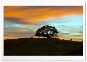 Summer Tree, Sunset HD Wide Wallpaper for Widescreen