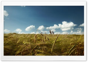 Summer Wind HD Wide Wallpaper for Widescreen
