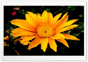 Sun HD Wide Wallpaper for Widescreen