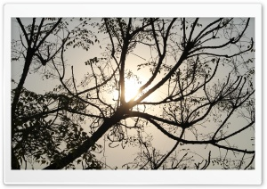 Sun and Tree HD Wide Wallpaper for Widescreen