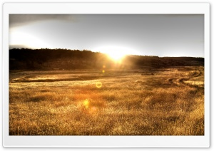 Sun Backlit Grain HD Wide Wallpaper for Widescreen