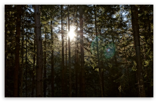 Sun Between Trees HD wallpaper for Wide 16:10 5:3 Widescreen WHXGA WQXGA WUXGA WXGA WGA ; HD 16:9 High Definition WQHD QWXGA 1080p 900p 720p QHD nHD ; Standard 4:3 5:4 3:2 Fullscreen UXGA XGA SVGA QSXGA SXGA DVGA HVGA HQVGA devices ( Apple PowerBook G4 iPhone 4 3G 3GS iPod Touch ) ; Tablet 1:1 ; iPad 1/2/Mini ; Mobile 4:3 5:3 3:2 16:9 5:4 - UXGA XGA SVGA WGA DVGA HVGA HQVGA devices ( Apple PowerBook G4 iPhone 4 3G 3GS iPod Touch ) WQHD QWXGA 1080p 900p 720p QHD nHD QSXGA SXGA ; Dual 16:10 5:3 WHXGA WQXGA WUXGA WXGA WGA ;