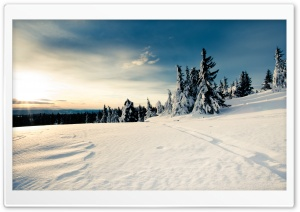 Sun Forests Nature Snow HD Wide Wallpaper for Widescreen