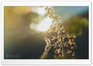 Sun Glares Ultra HD Wallpaper for 4K UHD Widescreen desktop, tablet & smartphone