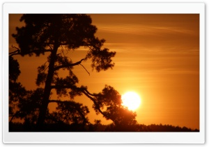 Sun On A Tree Branch HD Wide Wallpaper for Widescreen