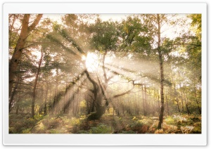 Sun Rays Shining through Tree Ultra HD Wallpaper for 4K UHD Widescreen desktop, tablet & smartphone