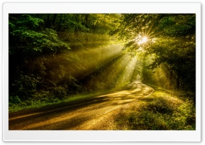 Sun Rays through the Forest Trees, Road Ultra HD Wallpaper for 4K UHD Widescreen desktop, tablet & smartphone