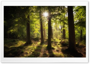 Sun Rays Through Trees HD Wide Wallpaper for Widescreen