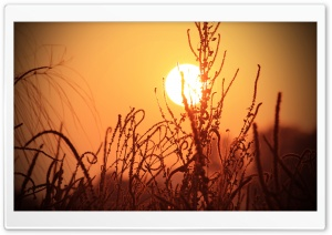 Sun Rise HD Wide Wallpaper for Widescreen