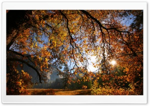 Sun Shining Through Tree Branches HD Wide Wallpaper for Widescreen