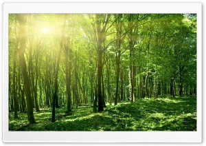 Sun Spring Green Forest HD Wide Wallpaper for Widescreen