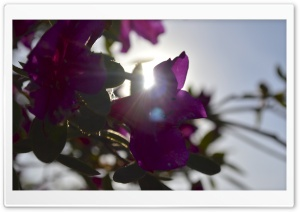 Sun through Flowers HD Wide Wallpaper for Widescreen