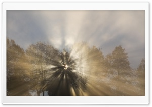 Sun Thru Fog And Trees Oregon HD Wide Wallpaper for Widescreen
